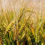 В Минсельхозе хотят «включить мозг фермерам»