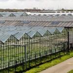 В Казахстане намерены создать индустриальный аграрный парк с участием ведущего голландского НИИ