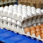 Экологически чистую сельхозпродукцию экспортируют десятки предприятий Алматинской области