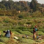 Агроэкология поможет изменить мировое производство продовольствия