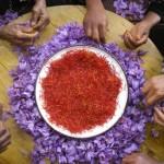 Маркировка региона происхождения продуктов питания – толчок к развитию экономик на местах