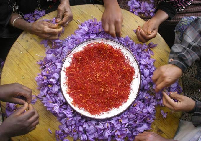 Ручное производство шафрана в Марокко. Фото: ©ФАО