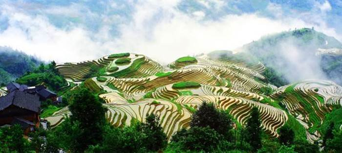 Фото: © Agriculture Bureau of Longsheng Country