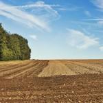 Стратегия весеннего сева – 2018 (для анализа)