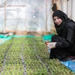Для будущего Сирии необходимы инвестиции в сельское хозяйство