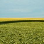 Monsanto займется генным редактированием сельскохозяйственных культур
