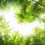 Карагандинцев призывают посадить «собственный лес»