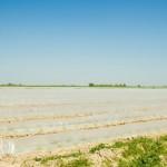 Оңтүстікқазақстандық диқандар 26 мың гектарға бақша дақылдарын егуде