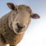 Партнёры в Китае предлагают нашему КХ экспортировать овец. Какие документы необходимо для этого собрать?