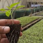 Аграрлық несие корпорациясы микрокредиттеуге 20 млрд теңге ұсынады