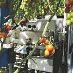 Panasonic испытывает «умных» роботов-собирателей томатов на ферме в Японии