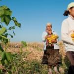 Сельское хозяйство должно способствовать сохранению биологического разнообразия