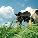 В Алматинской области гибнет скот из-за того, что пастбища отдали в частные руки