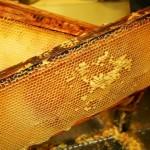 Украинский мёд имеет в составе антибиотики
