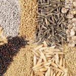 В Костанайской области семеноводство дополнительно просубсидируют на 222 млн тенге