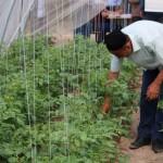 ФАО строит теплицы в школах Таджикистана