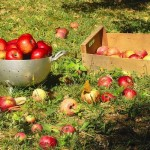 Садовод обратился в Мажилис с просьбой помочь: Аграрка – это не нефтяная вышка