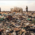 Загрязнение почв: авторы доклада бьют тревогу