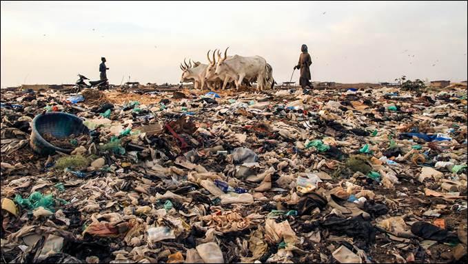 В Сенегале пастух пасет свое стадо рядом с кучей мусора. / Фото: ©Julien Saison