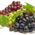 От приусадебного виноградарства к промышленному