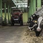 Мировые цены на продовольствие выросли в мае