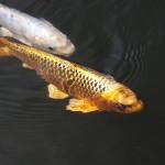 Рыбопитомник, который зарабатывает миллионы