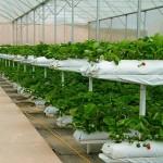 «Умные» фермы в помощь казахстанским аграриям