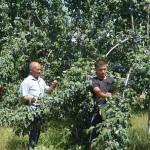 Эксперты: органическая продукция может стимулировать развитие в Центральной Азии