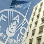 В Казахстане планируется открытие представительства ФАО в формате Бюро по связям и партнёрству