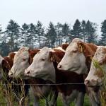 В Северо-Казахстанской области нашли способ экономить до 40% на кормах для скота