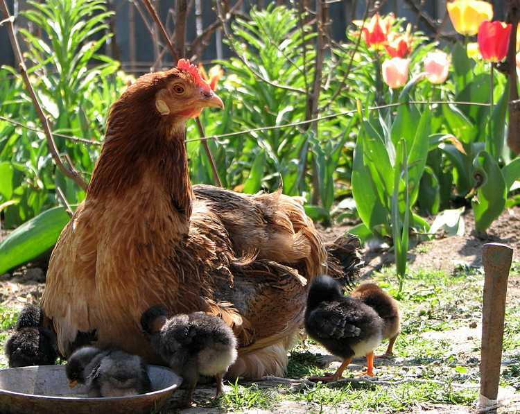 Фото: freeimages.com