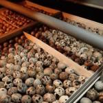 Экологически чистую продукцию производит фермер из Зыряновска