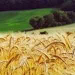 Интерес к сельскому хозяйству и агрономии будут прививать школьникам в новом экотехноцентре в Аксу