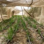 ОЭСР-ФАО: Сельскохозяйственный прогноз на ближайшее десятилетие