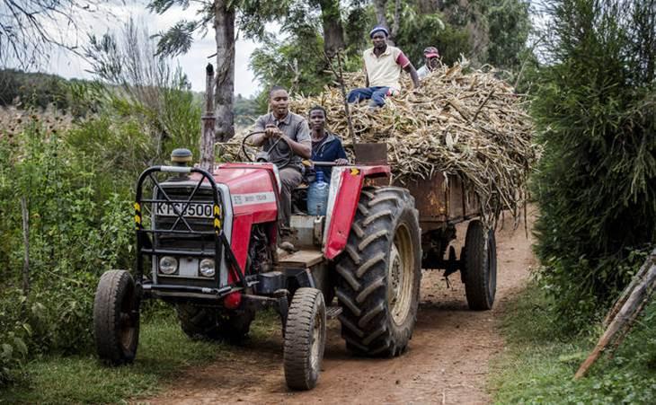 Фермеры в Кении. Фото: ©ФАО/Луис Тато Luis Тато