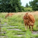 Как можно получить от государства в аренду зем. участок под производство, животноводство или для нужд сельского хозяйства?