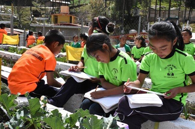 На школьном огороде уроки математики проходят гораздо интереснее! ©ФАО/Фернандо Рейес Пантоха
