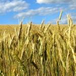 Проблему сохранения плодородия почвы обсудили на агросовещании в Костанайской области
