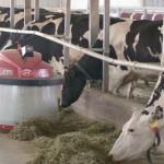 Робот «Пастух» появился на одном из молочных предприятий Туркестанской области
