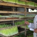 Ноу-хау в области выращивания кормов внедрил парень из Алматинской области