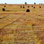 ФАО содействует развитию органического сельского хозяйства в Казахстане