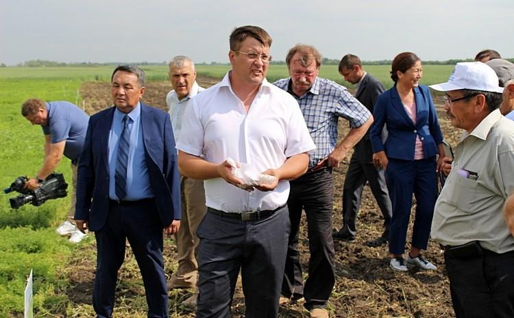 Зернобобовые являются выгодными предшественниками для других культур / Фото: Алёна Зинченко