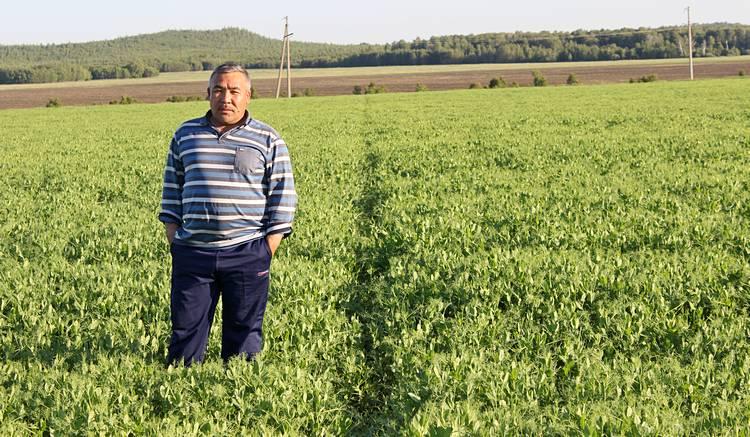Агроном хозяйства Кинжалинов Е. Б. на участке, обработанном Парадоксом / Фото: ТОО «Август-Казахстан»