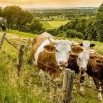 РГП «Республиканская ветеринарная лаборатория» бесплатно проведёт исследования кормов и анализ крови сельхозживотных по всему Казахстану до конца года