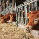 Какие документы нужны для получения субсидий на строительство баз (ферма, фазенда) на 500 голов КРС?