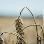 Нехватка знаний становится проблемой в сельском хозяйстве – эксперт