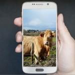 В Алматинской области трое молодых людей разработали идею продажи скота в онлайн-режиме