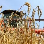 Слухи о проблемах с уборкой урожая зерна развеяли фермеры Акмолинской области