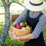 Каковы максимально допустимые размеры субсидирования проекта «Закладка интенсивного яблоневого сада от 5 гектаров»?