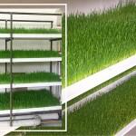 Через какие организации можно получить дотации на оборудование для производства зелёного корма методом гидропоники?